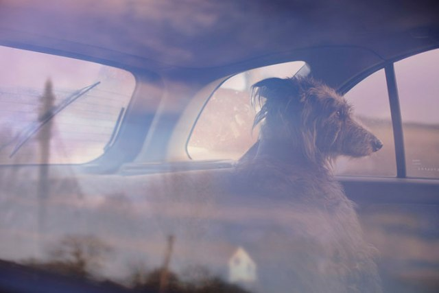 12-Martin-Usborne-The-Silence-Of-Dogs-In-Cars-yatzer