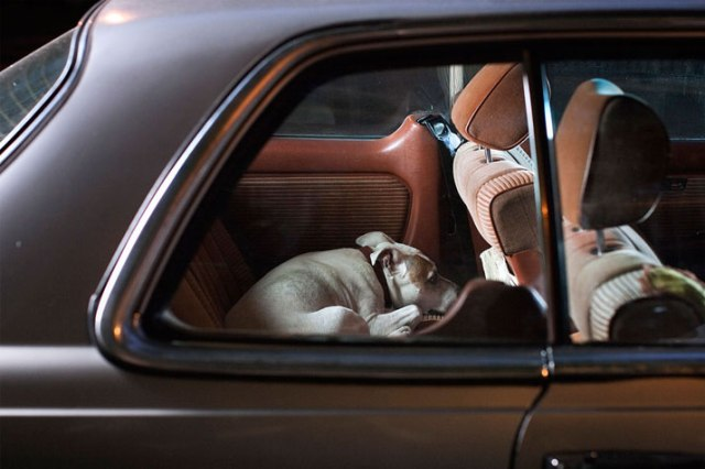 16-Martin-Usborne-The-Silence-Of-Dogs-In-Cars-yatzer