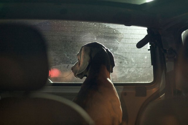 18-Martin-Usborne-The-Silence-Of-Dogs-In-Cars-yatzer