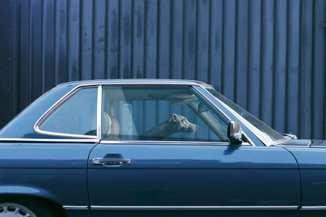 19-Martin-Usborne-The-Silence-Of-Dogs-In-Cars-yatzer