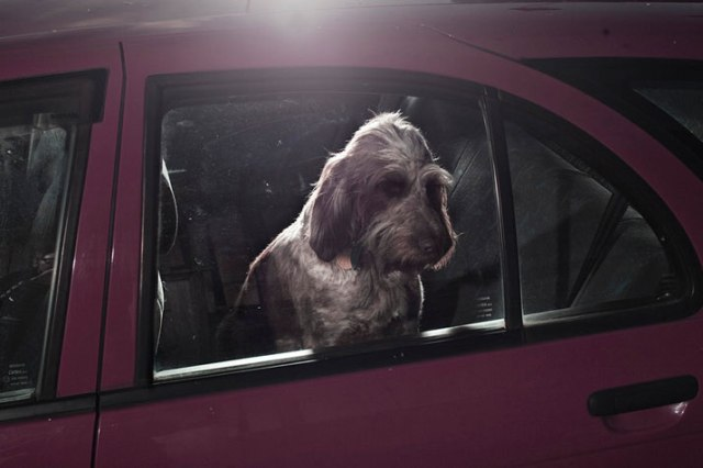 4-Martin-Usborne-The-Silence-Of-Dogs-In-Cars-yatzer